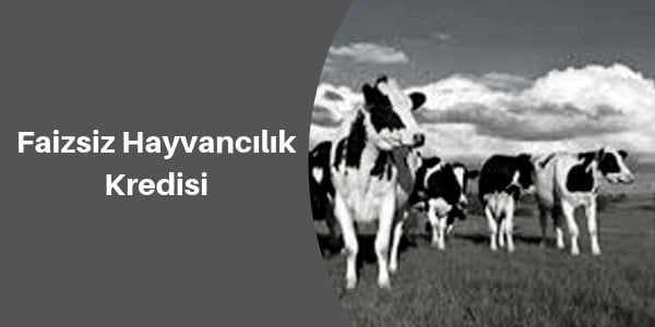 faizsiz hayvancılık kredisi